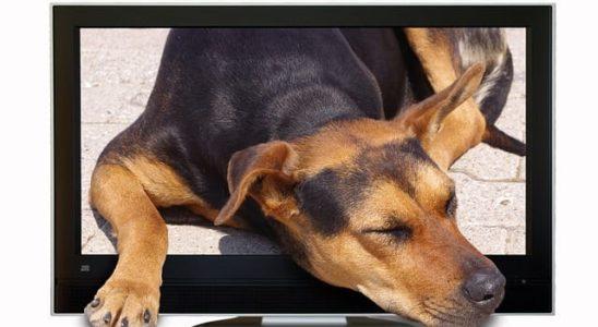 canal de tv para perros